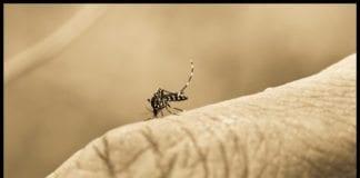Malariabærende mygg. (Foto: Bindaas Madhavi)