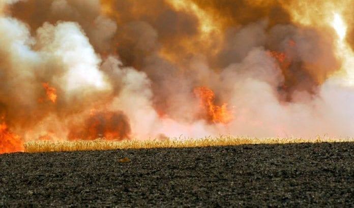 Brann i en åker etter rakettangrep fra Gaza-stripen. (Foto: Arkiv GPO)