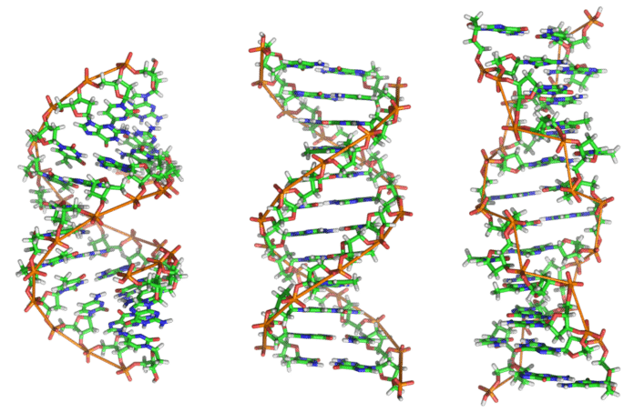 DNA-strukturer (Illustrasjon: Wikipedia)