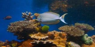 Koraller og fisk i Rødehavet (Foto: Israels turistkontor)