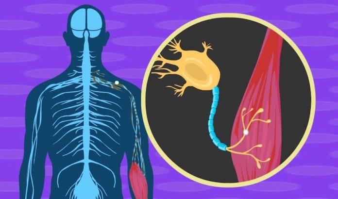 En illustrasjon av den nevrologiske prosessen som fører til ALS. (Foto: Skjermdump YouTube)