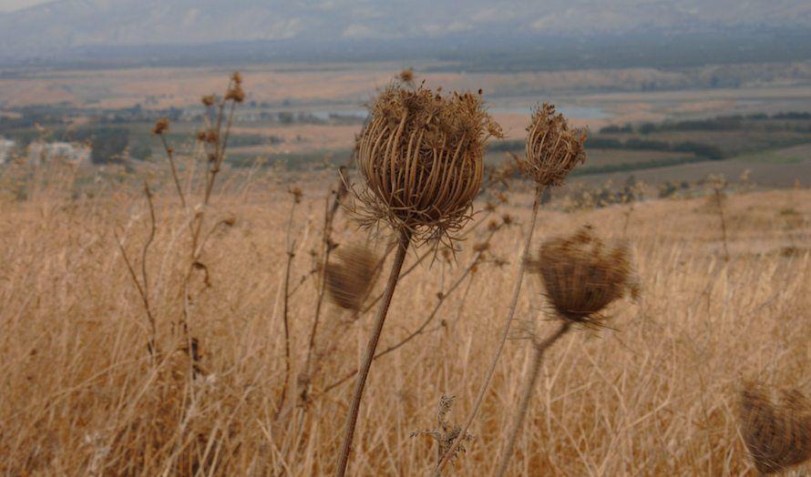 Etter flere år med tørke har store landområder tørket inn i Galilea. (Foto: Dror Schindler/Flickr)