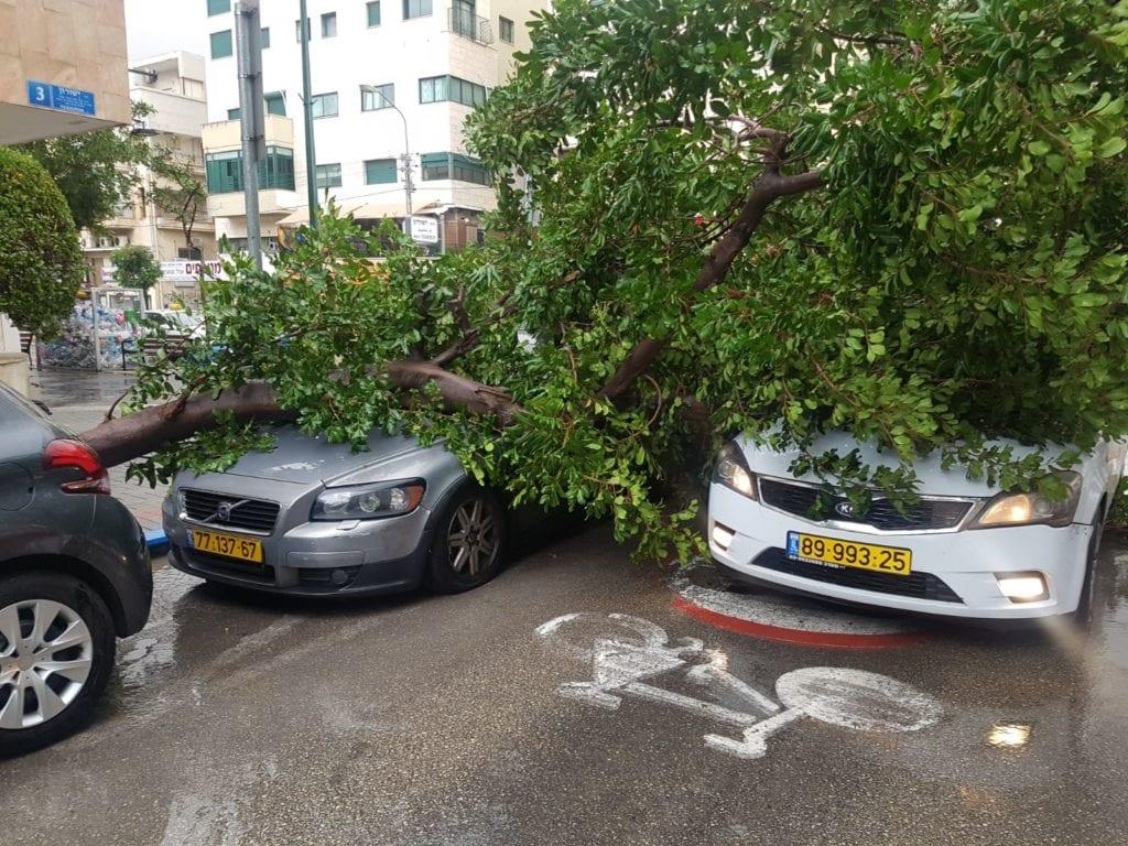 Vinden rev ned dette treet i Ben Yehuda-gaten i Tel Aviv. (Foto: Twitter/Hadashot 10)