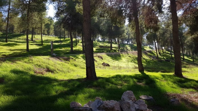 Yatir-skogen ligger mellom Beersheba og Hebron. (Foto: Jenny N. Müller)
